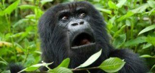 10 Day Rwanda Gorilla Safari