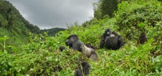 3 Days Rwanda Gorillas