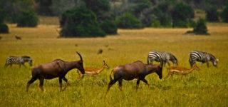 5 Days Rwanda Gorillas & Wildlife Safari