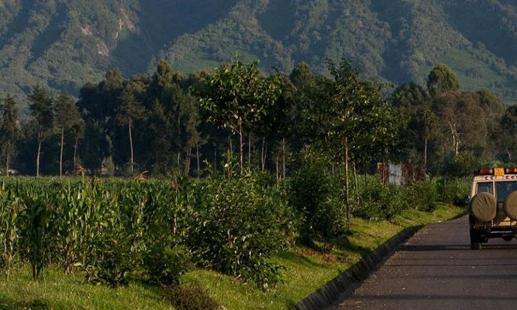 Volcnoes National Park Rwanda