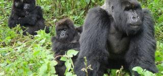 3 Days Bwindi Gorilla Safari from Kigali