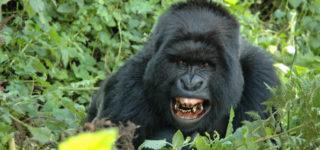 4 Days Bwindi & Lake Bunyonyi Safari