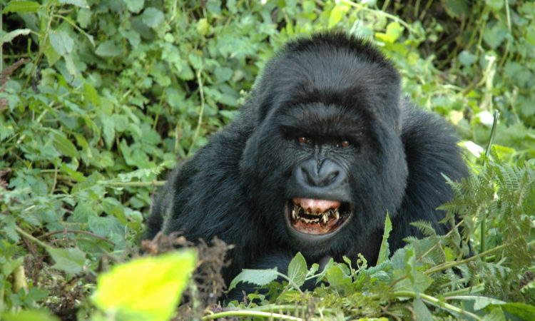 4 Days Bwindi & Lake Bunyonyi Safari