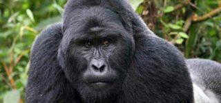 5 Days Uganda Gorillas and Wildlife