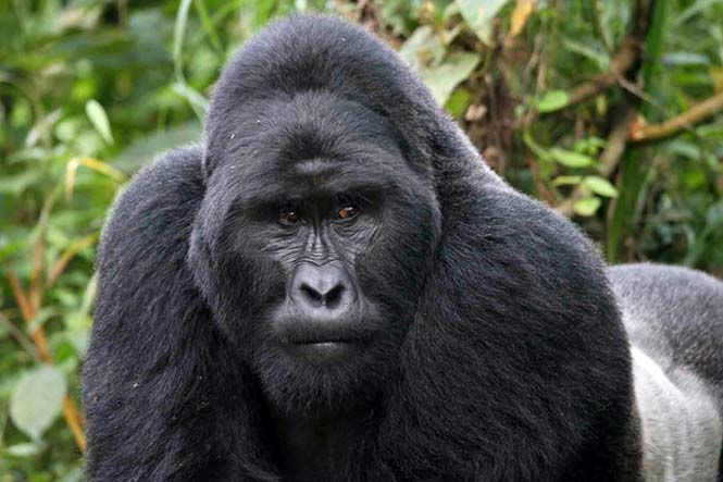 5 Days Uganda Gorillas and Wildlife